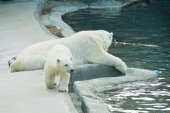 Teddy bear and polar bear. At rest Royalty Free Stock Photos