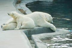 Teddy bear and polar bear at rest. Near the water Stock Photos