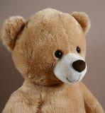 Teddy bear portrait Royalty Free Stock Photos