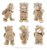 Teddy bear positions. Teddybear showing different set of positions royalty free stock photo