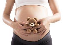 Teddy bear pregnant Royalty Free Stock Photos