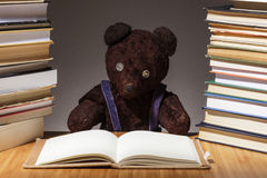 Teddy bear is preparing for the difficult exam Royalty Free Stock Image