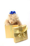 Teddy Bear Present. Teddy bear with bow on head pops out of a present Stock Image