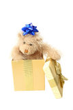 Teddy Bear Present. Teddy with bow on head in a present over white Royalty Free Stock Image