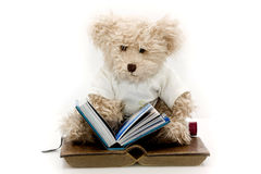 Teddy bear reader Stock Image