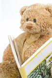 Teddy bear reading. Small teddy bear reading a book about trees Royalty Free Stock Photography
