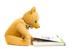 Teddy bear reading a book. Picture of a teddy bear reading a book against a white background Stock Photos