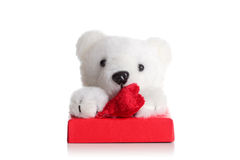 Teddy bear on a red giftbox Royalty Free Stock Image