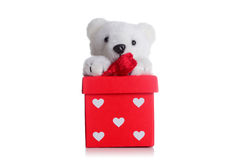 Teddy bear on a red giftbox Stock Images