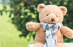 Teddy bear is relaxing. Outdoor Royalty Free Stock Image