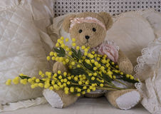 Teddy bear's eight of march. Teddy bear with a branch of mimosa for the feast of Women's Day Stock Photography