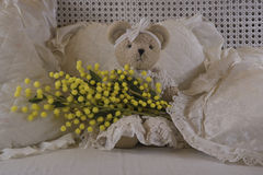 Teddy bear's eight of march. Teddy bear that is giving a branch of mimosa for the feast of Women's Day Stock Photo