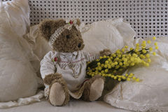 Teddy bear's eight of march. Teddy bear that is giving a branch of mimosa for the feast of Women's Day Stock Images
