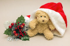 Teddy bear in Santa Claus hat and Christmas Flower Royalty Free Stock Image