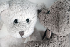 Teddy Bear Secrets. One teddy bear whispering into another's ear Royalty Free Stock Photo