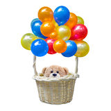 Teddy bear sitting in the basket. A photo of Teddy bear sitting in the basket of a colorful balloon tied to it on white isolate background Stock Images