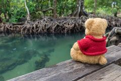 Teddy bear sitting on a bridge near the natural canal. The clear green stream flows through the mangrove forest root. In the midst of the shady and beautiful stock images