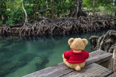 Teddy bear sitting on a bridge near the natural canal. The clear green stream flows through the mangrove forest root. In the midst of the shady and beautiful royalty free stock photography