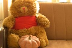 A Teddy Bear, with a Pumpkin stock photos