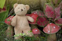 Teddy bear sitting enjoy the garden. stock image