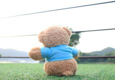 Teddy bear sitting on the grass . Concept about love and waiting. For someone Stock Photo