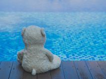 Teddy Bear Sitting seul près de piscine Photographie stock libre de droits