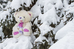 Teddy bear sitting in the snow on coniferous tree Royalty Free Stock Photography