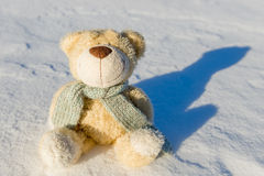 Teddy bear   sitting in the snow Royalty Free Stock Photography