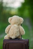 Teddy bear sitting on a suitcase Stock Photos