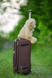 Teddy bear sitting on a suitcase Stock Images