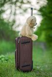 Teddy bear sitting on a suitcase Royalty Free Stock Image
