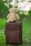 Teddy bear sitting on a suitcase Stock Image