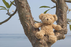 Teddy bear sitting on the tree. Teddy bear sitting on the tree have sea background Stock Images