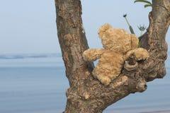 Teddy bear sitting on the tree. Teddy bear sitting on the tree looking sea Royalty Free Stock Photos