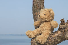 Teddy bear sitting on the tree. Teddy bear sitting on the tree sea background Royalty Free Stock Image