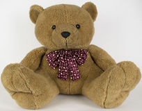 Teddy Bear Sitting White Background Immagini Stock Libere da Diritti