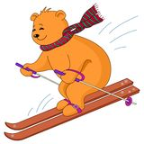 Teddy-bear skies. Teddy-bear goes for a drive on the mountain skiing, isolated Stock Photos