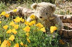 Teddy bear smelling wild flowers Stock Image