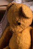 The teddy bear Stock Image