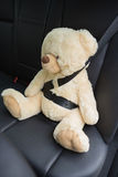 Teddy bear strapped in with seat belt Royalty Free Stock Images