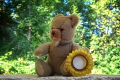 Teddy bear with sunflower frame Stock Images