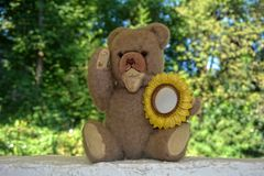 Teddy bear with sunflower frame Royalty Free Stock Photography