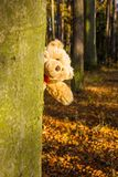 Teddy bear. In autumn forest Stock Image