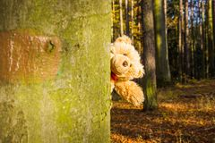 Teddy bear. In autumn forest Stock Photography