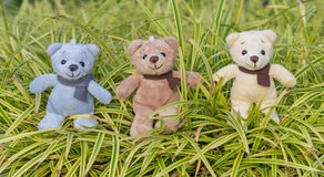 TEDDY BEAR three color with scarf Royalty Free Stock Images