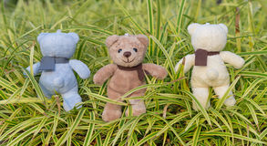 TEDDY BEAR three color with scarf Royalty Free Stock Photography
