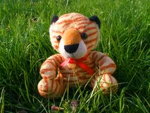 Smiling teddy bear toy sitting on the grass royalty free stock image