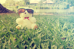 Teddy Bear toy alone with sun glass Stock Images