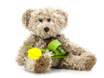 Teddy bear with tulip Royalty Free Stock Image