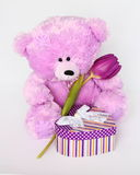 Teddy Bear with tulip - Valentines Day Stock Photos. Teddy Bear with tulip - Valentines Day or Mothers day card : cute purple Teddybear with flower and gift box royalty free stock photo